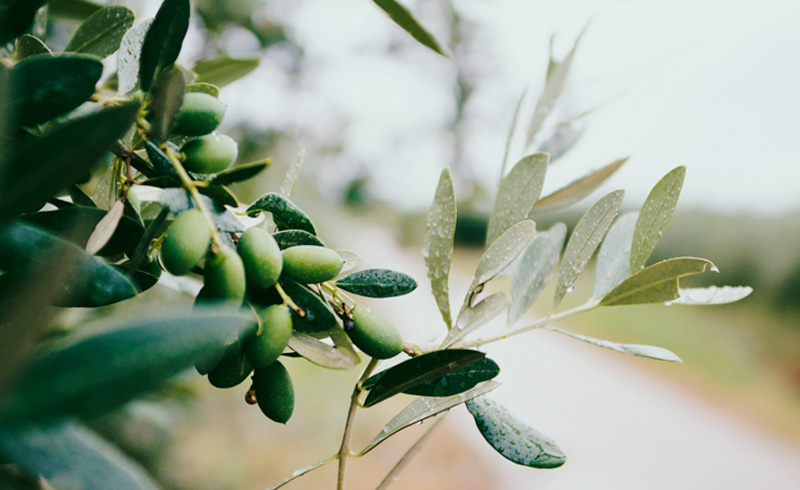 superfoods oliwa z oliwek